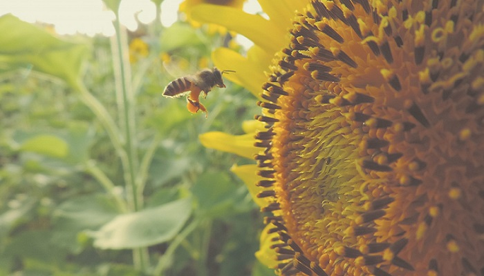 What can we learn from the bees?